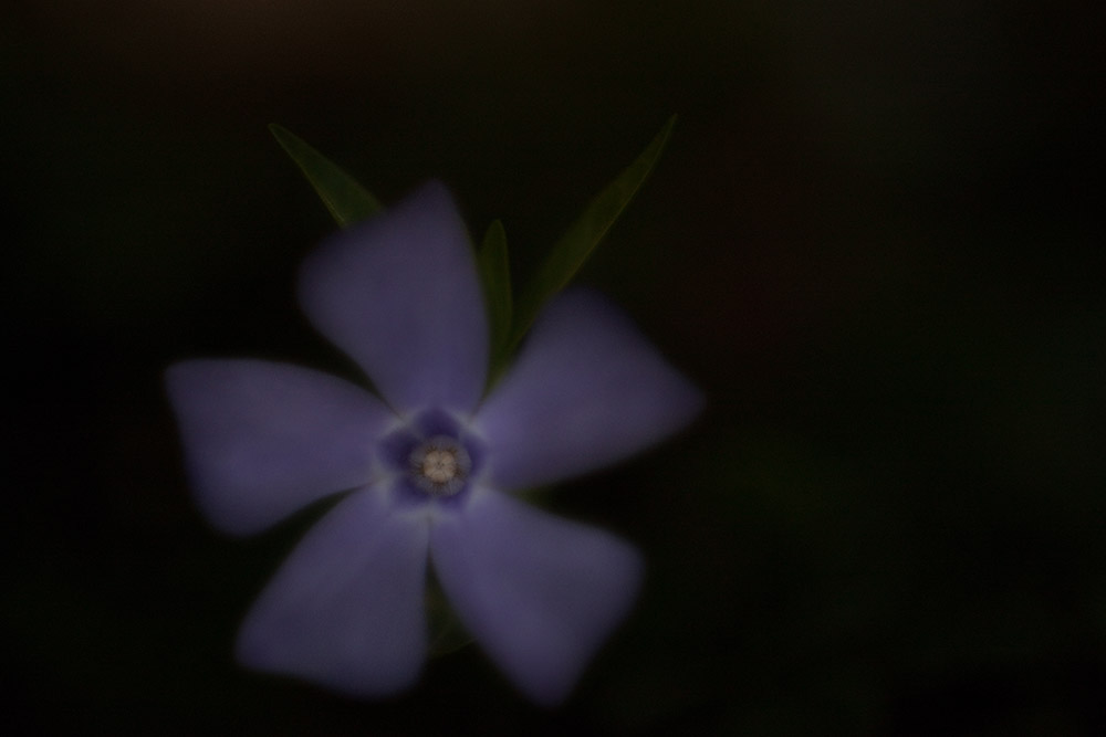 underexposed flower